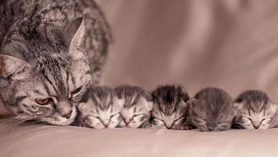 Cách chăm sóc mèo mẹ mới đẻ kinh nghiệm nuôi mèo thành công.