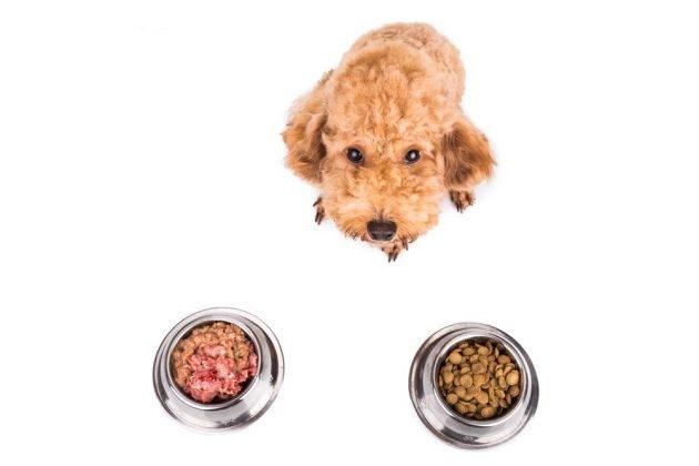Thức ăn cho chó tốt nhất năm 2019