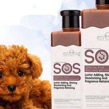 Chó Poodle 1 tuần tắm mấy lần và cách tắm cho chó Poodle